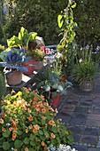 Naschterrasse mit Kräutern und Gemüse