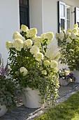 Hauseingang mit Hydrangea 'Limelight' (Rispenhortensien)