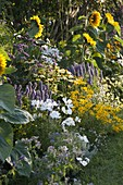 Helianthus 'Summer Breeze'(Sonnenblumen), Agastache'Blue Fortune'
