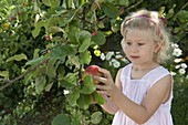 Apfelernte mit Kindern