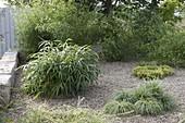 Kiesgarten mit Bambus und Gräsern