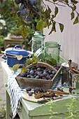 Frisch geerntete Zwetschgen (Prunus domestica) in Holz-Korb