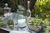 Hopfenlikör : Humulus lupulus (Hopfen) mit Zucker und Wodka ansetzen