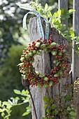 Kranz aus Humulus lupulus (Hopfen) und Rosa (Hagebutten)
