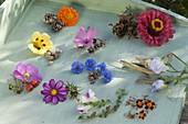 Tableau mit Sommerblumen und Samen