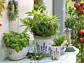 Basilikum (Ocimum basilicum), Thymian (Thymus vulgaris), Salbei