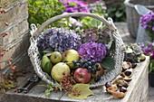 Korb mit frisch geernteten Äpfeln (Malus),