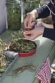 Getrocknete Teekräuter vorbereiten und in Dosen und Gläser abfüllen