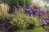 Herbstbeet mit Gräsern : Pennisetum compressum 'Hameln'