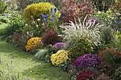 Herbstbeet mit Chrysanthemum v.r. : 'Zelos' 'Kilo' 'Kiroul' 'Lara' 'Kifix' 'Kipl