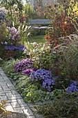 Herbstbeet mit Aster dumosus 'Sapphire' 'Purple Diamond' 'AquaCompact'