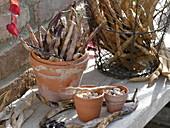 Tontöpfe mit getrockneten Bohnen (Phaseolus)