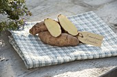 Kartoffel - Sorte 'Bamberger Hörnchen' (Solanum tuberosum)
