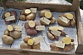 Verschiedene Kartoffelsorten als Tableau mit Etikett und aufgeschnitten
