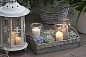 weiße Laterne, Windlichter auf Holz-Tablett mit Hydrangea (Hortensienblüten)