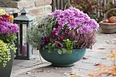 Chrysanthemum (Herbstchrysanthemen), Calluna (Besenheide), Viola