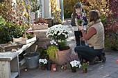 Frau bepflanzt Terracotta-Kübel mit weißem Chrysanthemen-Stämmchen
