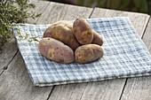 Kartoffel - Sorte 'Mayan Twilight' (Solanum tuberosum)