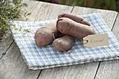 Kartoffel - Sorte 'Roseval' (Solanum tuberosum) mit Etikett