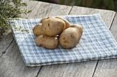 Kartoffel - Sorte 'Sieglinde' (Solanum tuberosum)