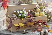 Geschenk für Gartenfreunde : Holzkiste gefüllt mit Zwiebeln von Narcissus