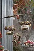 Windlichter dekoriert mit Haselnüssen (Corylus), Rosa (Hagebutten)