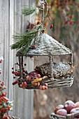 Vogel-Futterhäuschen aus Korb, gefüllt mit Blütenkopf von Helianthus