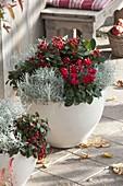 weiße Kübel mit rot-silberner Bepflanzung