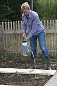 Frau gießt frisch gepflanzten Fenchel (Foeniculum) an