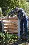 Mann baut Kompost-Behälter zusammen, Mangold (Beta vulgaris)