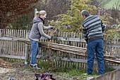 Frau und Mann hängen zusammengebundene Bohnenstangen an Gartenzaun