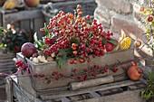 Holz-Kasten gefüllt mit Rosa (Hagebutten), Ilex (Stechpalme), Skimmia