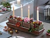 Adventliche Kerzendeko mit Malus (Zieräpfeln), Rosa (Rose, Hagebutten)