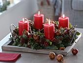 Natürlicher Adventskranz mit roten Kerzen : Abies procera (Nobilistanne)