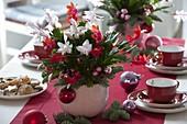 Zweifarbige Schlumbergera (Weihnachtskaktus) dekoriert