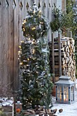 Rankstele weihnachtlich geschmückt mit Zweigen von Picea omorica