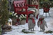Weihnachtliche Terrasse mit Helleborus (Christrosen) und Erica carnea