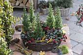 Winterfest bepflanzter Weiden - Ring