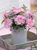 Dianthus 'Fantasy' (Nelken), Chrysanthemum Madiba 'Tanga Pink'