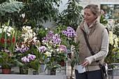 Frau kauft Blumen im Gartencenter