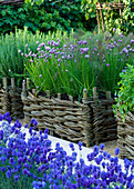 CHELSEA 2008: DAYLESFORD ORGANIC. Designer DEL BUONO GAZERWITZ - Herb POTAGER:WOVEN WILLOW BEDS with CHIVES - ALLIUM SCHOENOPRASUM