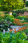 WOLLERTON Old HALL, SHROPSHIRE. VIEW ACROSS LANHYDROCK Garden with Iris 'JANE PHILLIPS' IN FOREGROUND, ERYSIMUM 'Apricot DELIGHT'