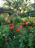 THE GRAY HOUSE, OXFORDSHIRE, DESIGNED by Tim REES. HERBACEOUS BORDER IN SUMMER with BACKLIT STIPA TENUISSIMA AMD POPPIES