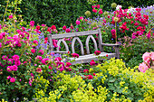 RHS Garden, ROSEMOOR, Devon: A PLACE TO SIT - WOODEN BENCH / SEAT SURROUNDED by Red ROSES AND ALCHEMILLA MOLLIS