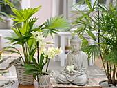 Buddha mit Livistona rotundifolia (Fächerpalme), Phalaenopsis