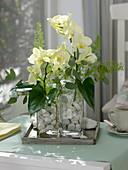 Gesteck mit Phalaenopsis (Malayenblumen, Schmetterlingsorchideen)