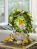 Muehlenbeckia (Drahtwein) österlich dekoriert mit Narcissus 'Tete a Tete'