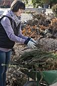 Frau sammelt Rückschnitt und Winterschutzmaterial auf Schubkarre