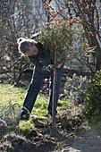 Winterschutz an Rosenstamm entfernen und Rückschnitt