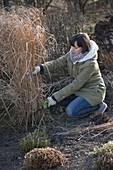 Frau schneidet Miscanthus (Chinaschilf) im März zurück